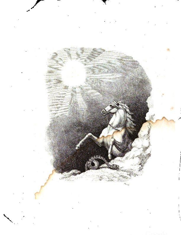 Reid2.Pferd.pdf