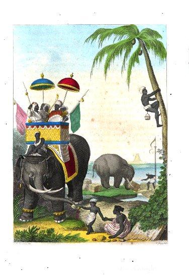 Schasler 5 Elefant.pdf